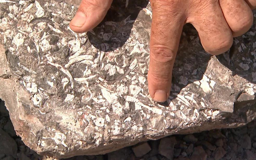 Mostrar  os ossos incrustados nos estromatólitos fósseis de Santa Rosa.